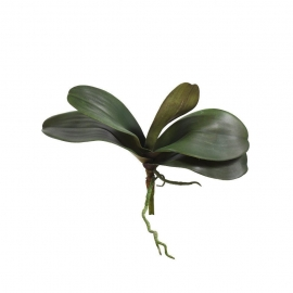 ORCHID LEAF 11033-90